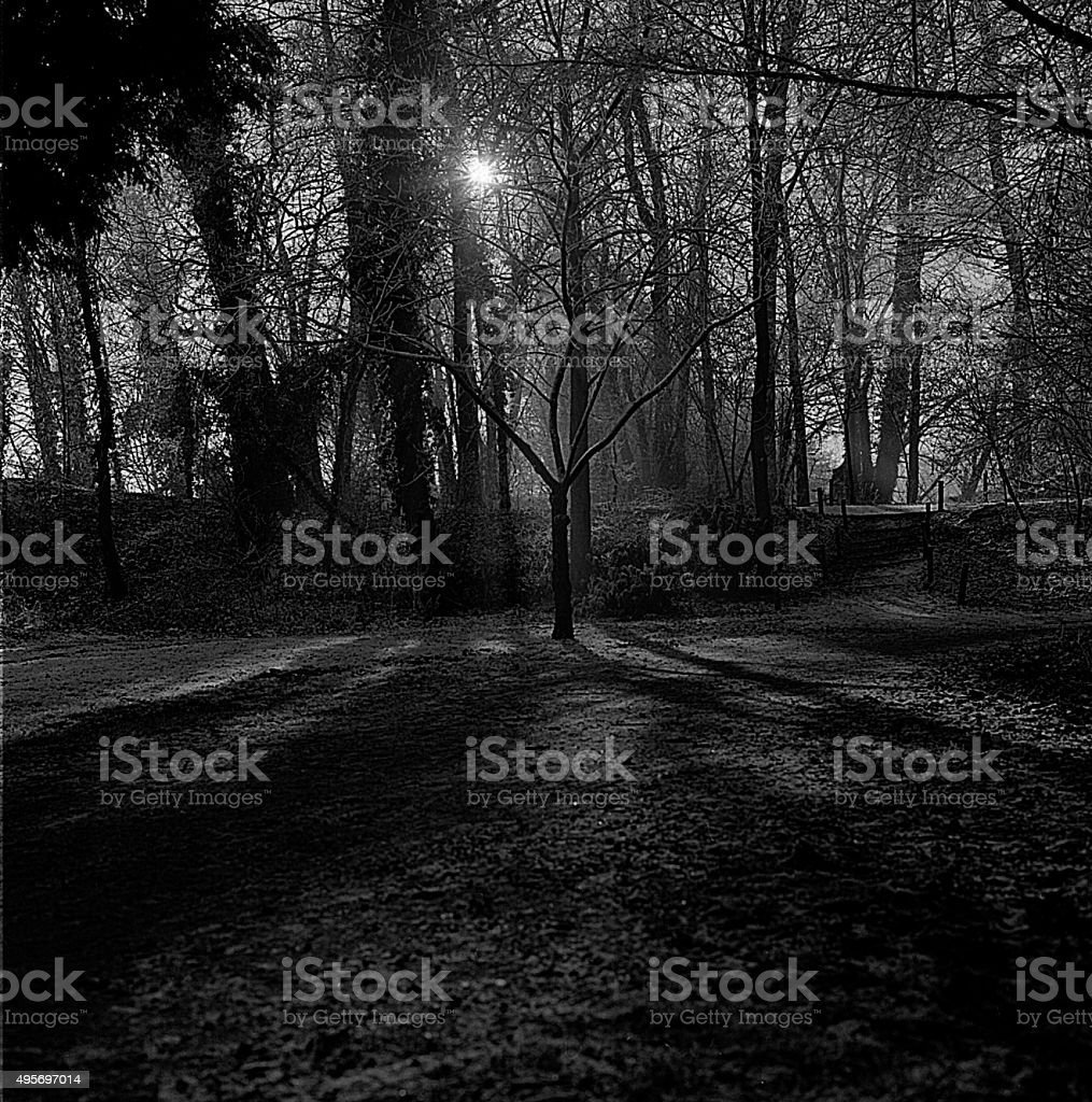Snow, lonely tree, winter time, evening shot, stock photo