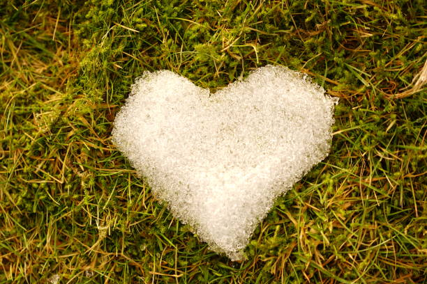 snow love - nature reserve stock photos and pictures