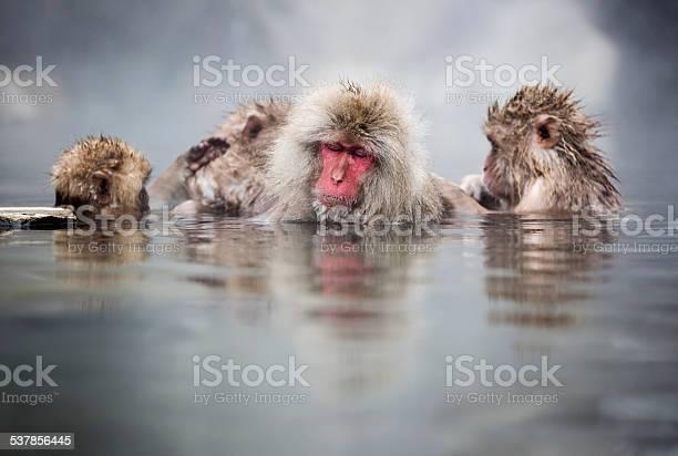 Snow monkey groming time picture id537856445?b=1&k=6&m=537856445&s=612x612&h=niaqa7bgqqna chehrre4apgnkvrgq7vgfc0rv0qf74=