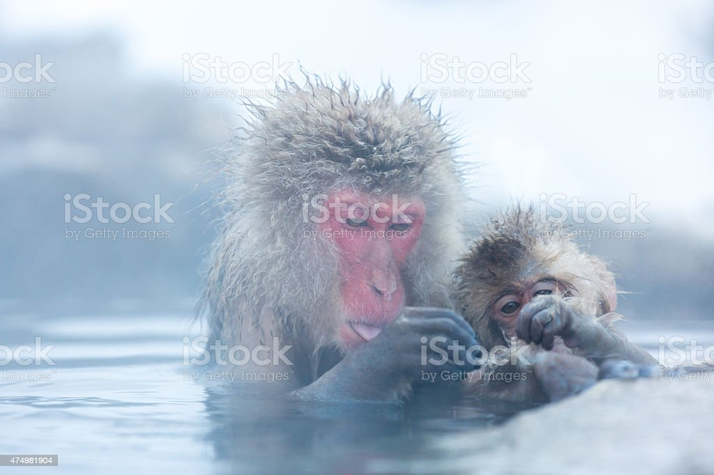 Snow monkey Macaque Onsen stock photo