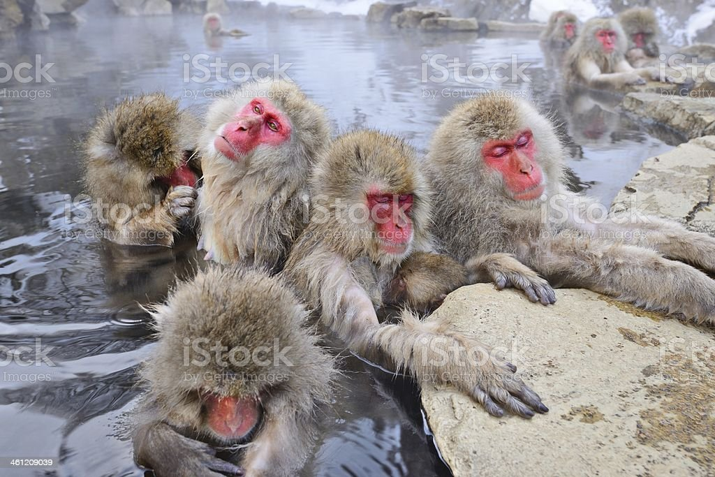 Snow Monkey Park stock photo