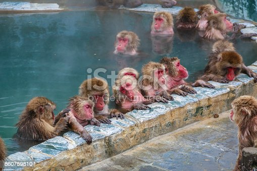 istock Snow monkeys (Japanese macaque) relaxing   in a hot spring pool (onsen) ,Hakodate ,Japan. 860759810