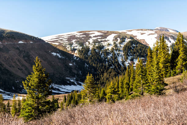 2019 yazında aspen, colorado yakınlarındaki kayalık dağlarda bağımsızlık geçidi'ndeki linkins gölü patikasında kar dağları manzarası ve çam ağaçları ormanı - independence day stok fotoğraflar ve resimler
