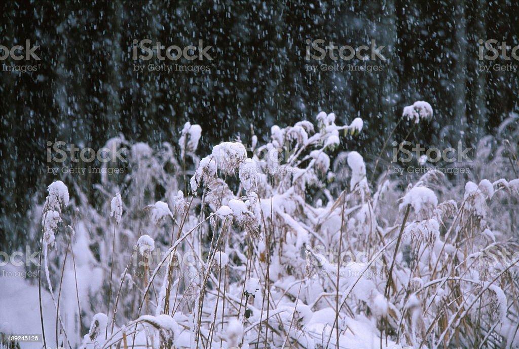 雪の冬のフィールド ストックフォト