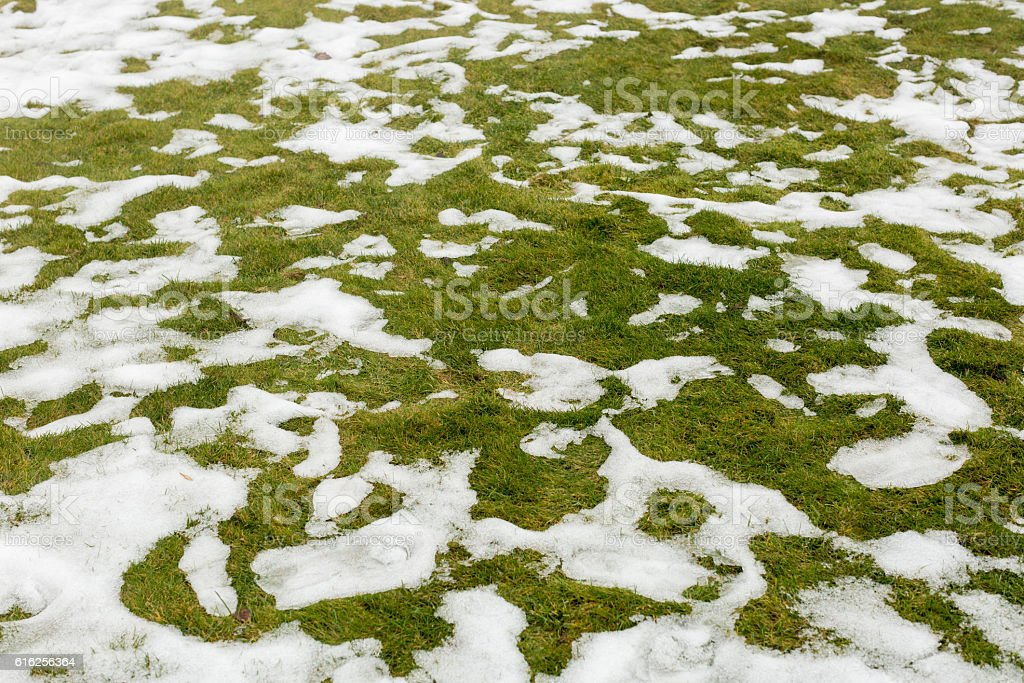 Snow on a grass. stock photo
