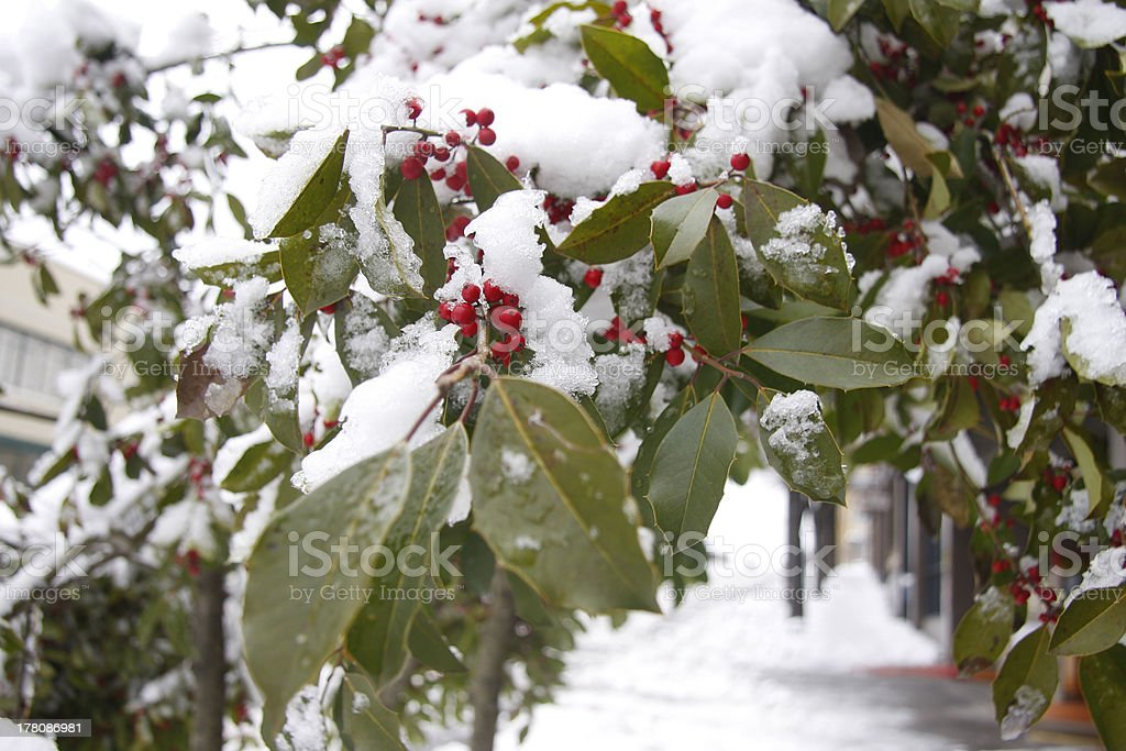 Snow on a Hawthorn Tree royalty-free stock photo