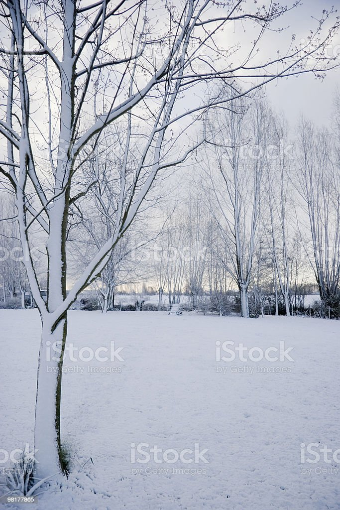snow on a  spring morning royalty-free stock photo
