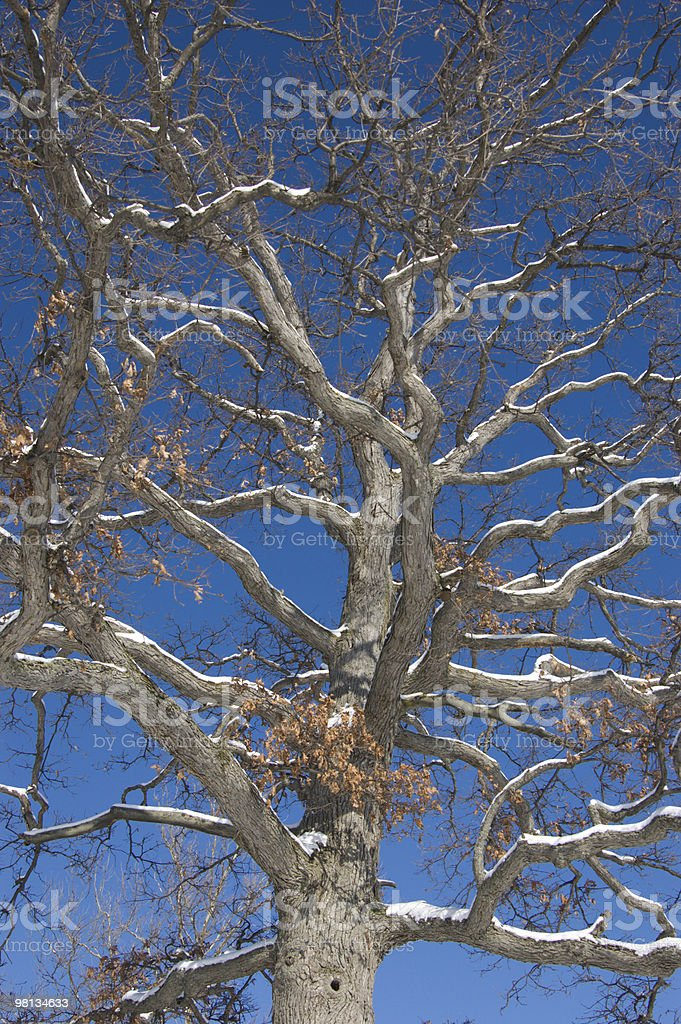 Snow on a Tree royalty-free stock photo