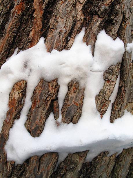 Snow on a tree trunk stok fotoğrafı