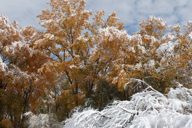Snow on Autumn Leaves stock photo