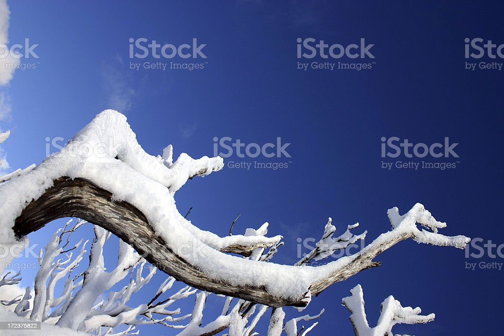 Snow on Branches royalty-free stock photo