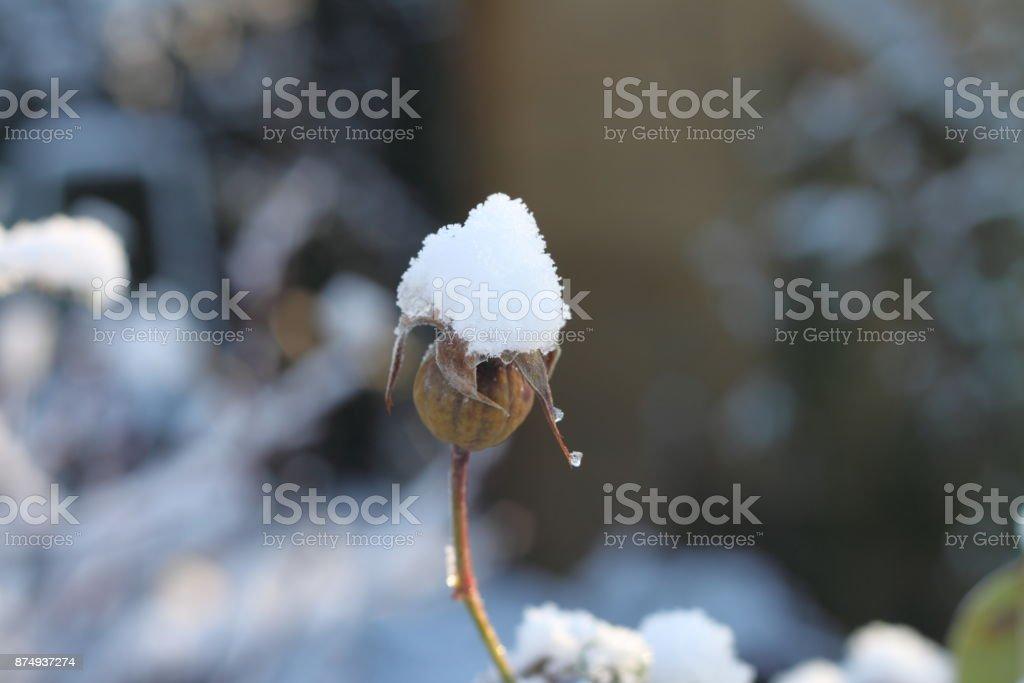 Bulletins d'enneigement sur la plante - Photo