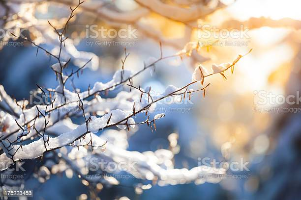 Photo of Snow on the Branch and Sunset - Winter Background