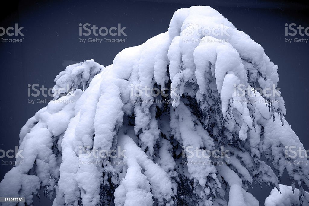 Snow on the tree royalty-free stock photo