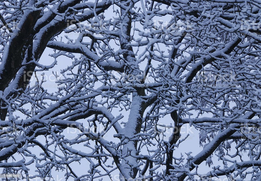Snow on Tree Branches royalty-free stock photo