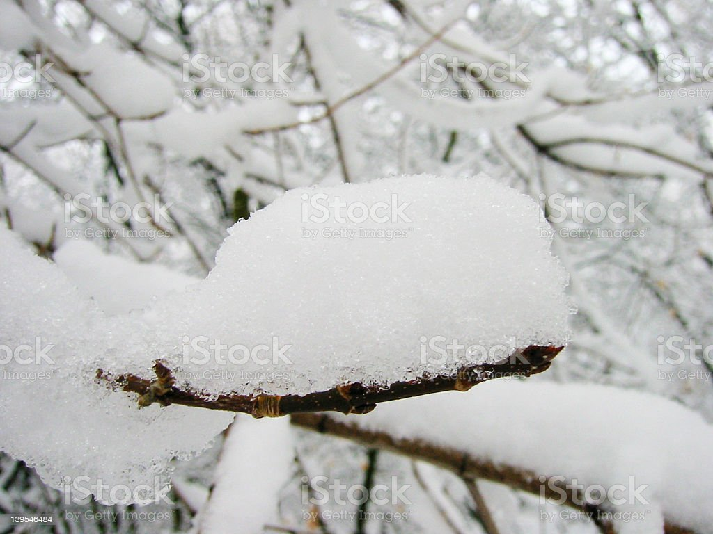Snow on Twig royalty-free stock photo