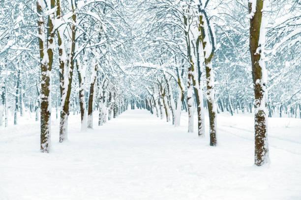 Snowpark mit weißen Bäumen – Foto