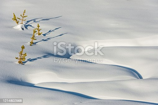 Snow Patterns; Winter in Yellowstone National Park, Wyoming