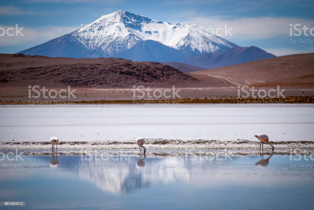 Snow peaked mountains reflect in a blue lake where three flamingos stand, Bolivia stock photo