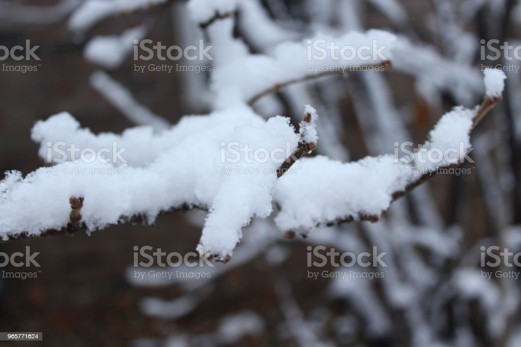 snow - Royalty-free Cold Temperature Stock Photo