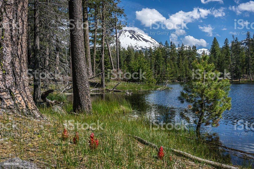 Snow plants, Reflection Lake and Lassen Peak in spring. stock photo