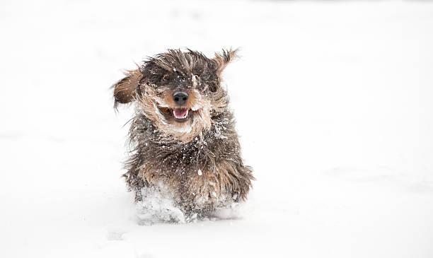 Snow plough picture id173690391?b=1&k=6&m=173690391&s=612x612&w=0&h=auij tryzaojivfpijkwrfi474vzjlhfjsc8v8jzhzq=