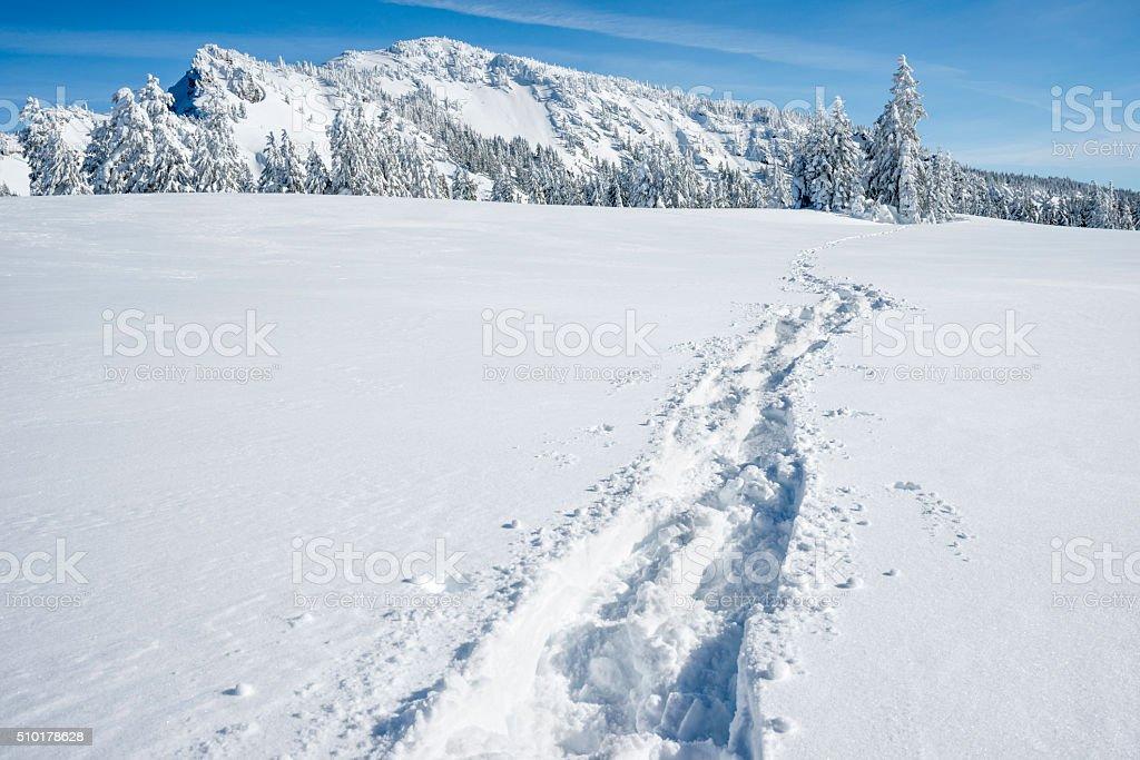 Snow shoe path in snow Snow shoe path in fresh snow  Adventure Stock Photo