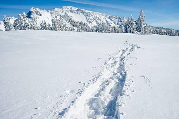 Snow shoe path in snow stock photo