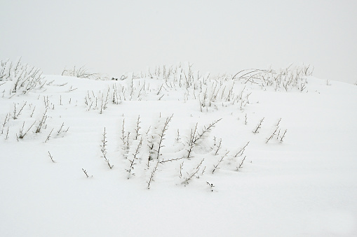 istock Snow storm and a beautiful freeze vegetation 636005218