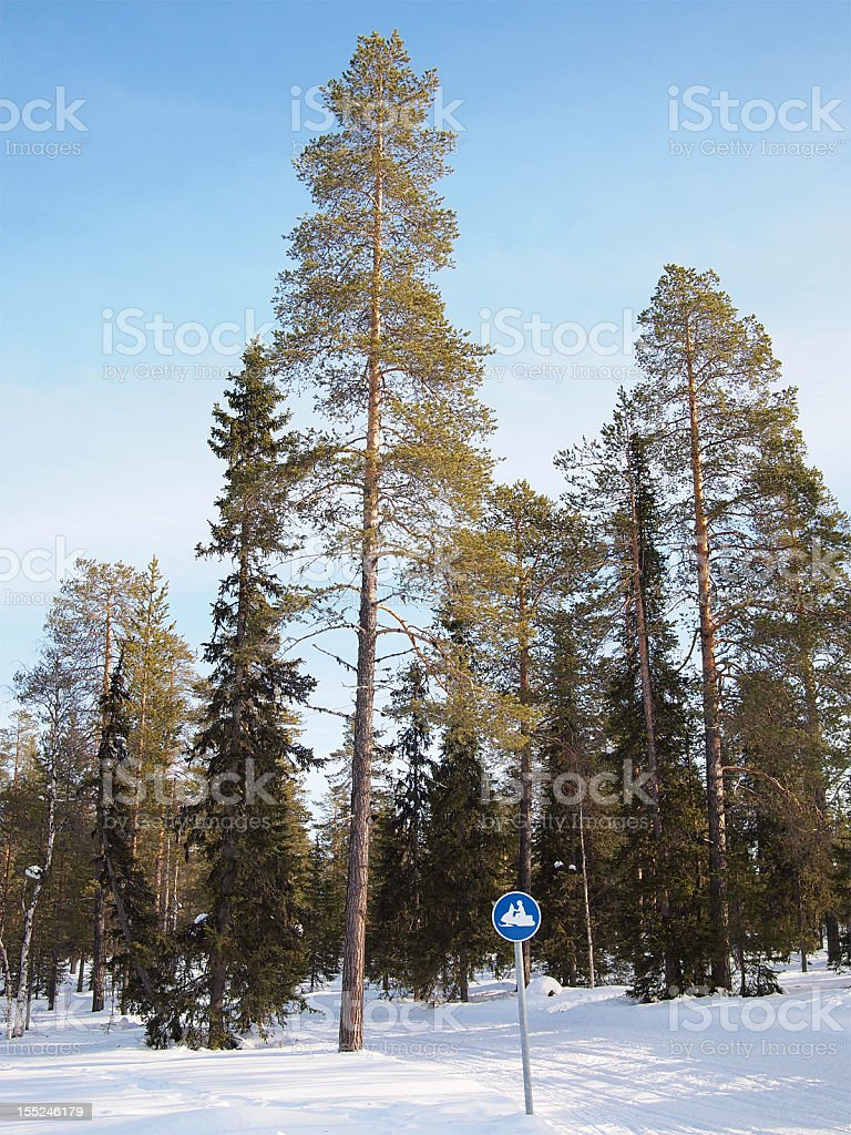 Snow track in the forest royalty-free stock photo