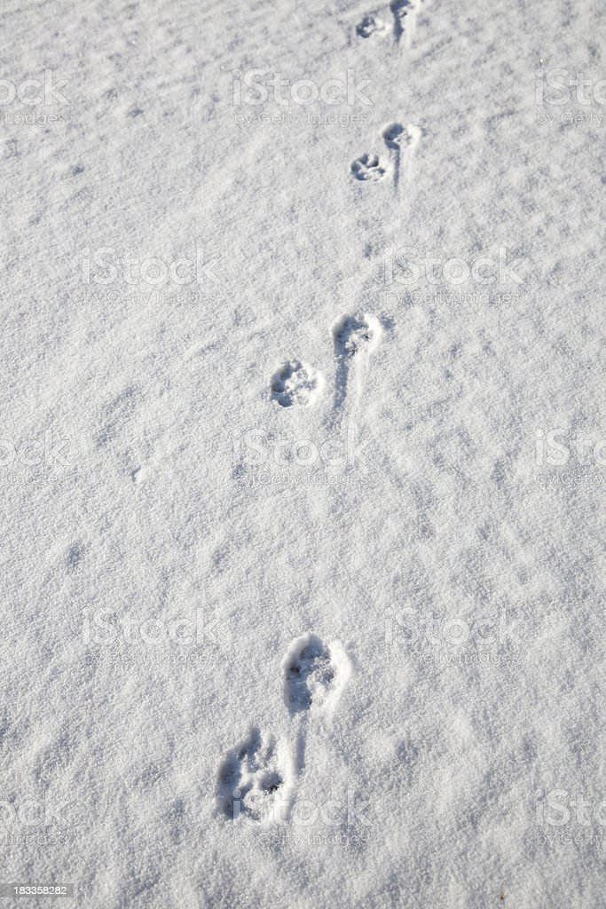 Snow Tracks royalty-free stock photo