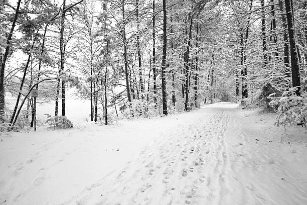 Snow trail in woods stock photo