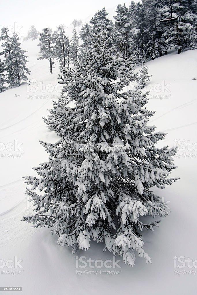 snow tree royalty-free stock photo