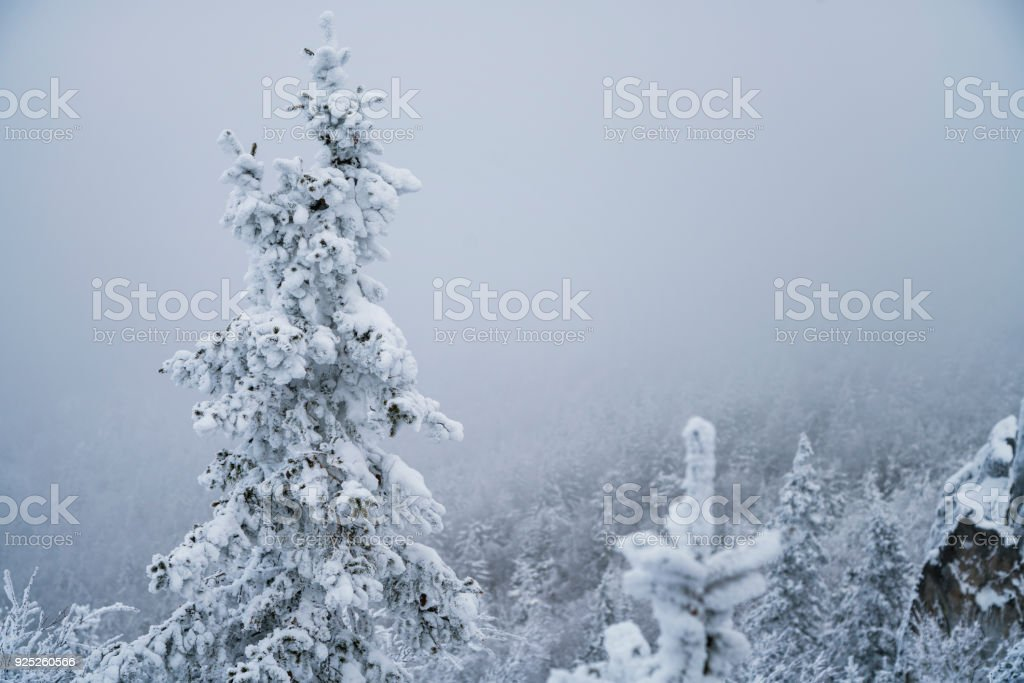 Snow trees on the top of mountain. South Ural, Russia stock photo