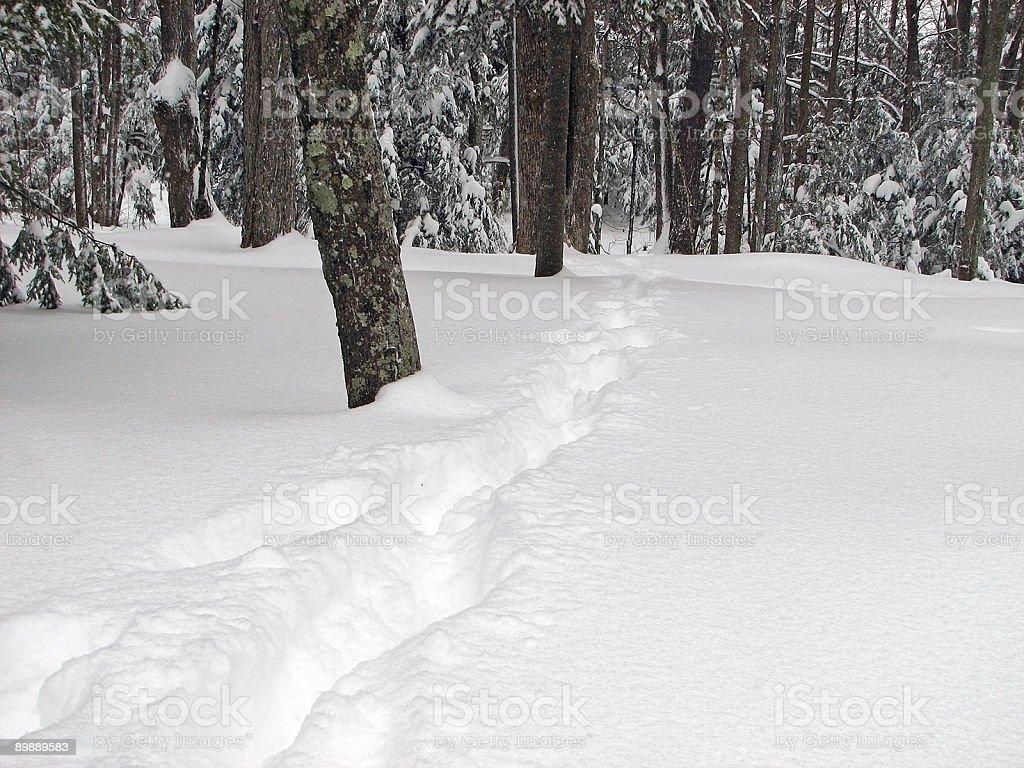 Snow Trek Trail Through Woods royalty-free stock photo