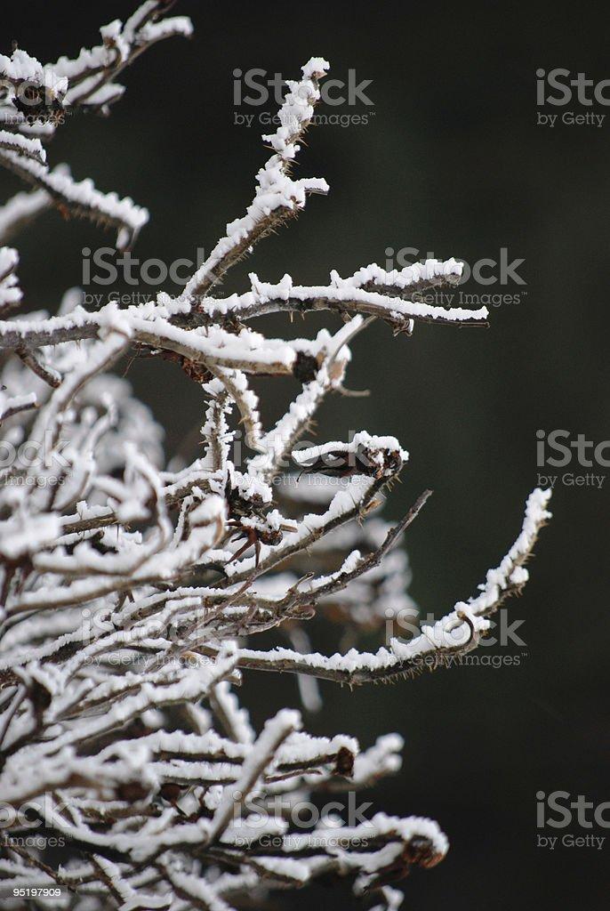 Snow twig stock photo