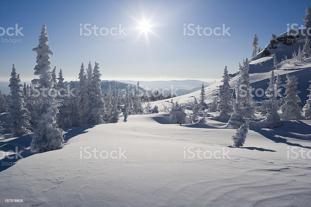 Snow. Winterpark.  Sheregesh. Cedar. stock photo