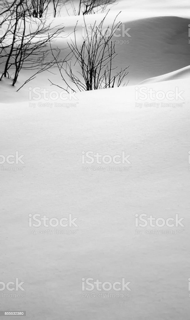 Snowbanks and plants stock photo