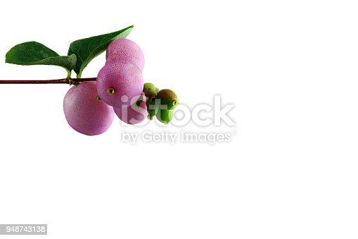 948743278istockphoto snowberry - symphoricarpos - with white background - left - top - small 948743138