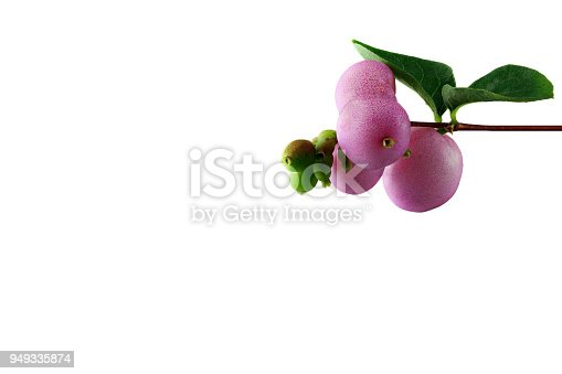 948743278istockphoto snowberry - symphoricarpos - with white background - right - top - small 949335874