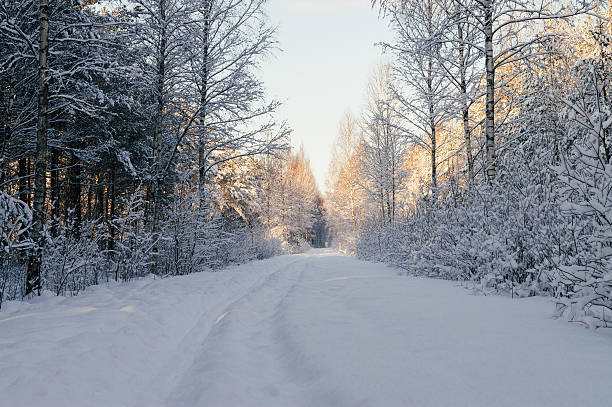 Snowbound countryside road in scenic forest – Foto