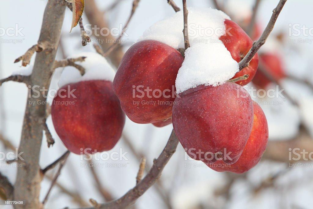 Snowcapped apples stock photo