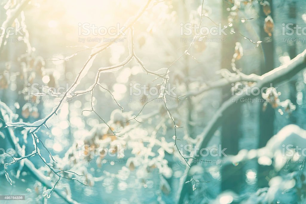 Snowcapped Branches In Winter Forest stock photo