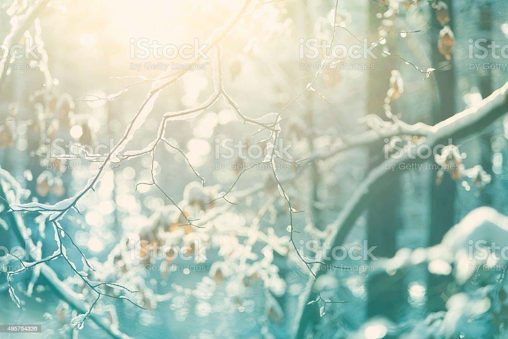 Les Branches enneigées en hiver forêt - Photo