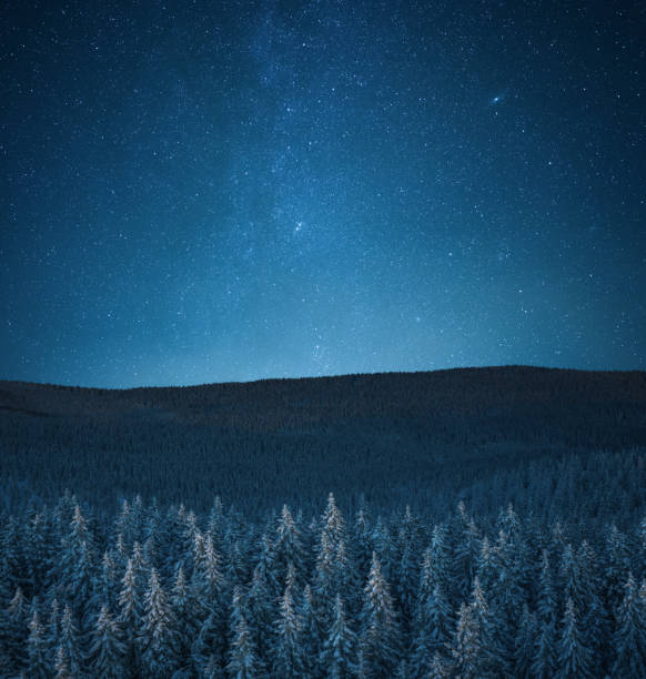 Snowcapped Forest Under The Stars stock photo