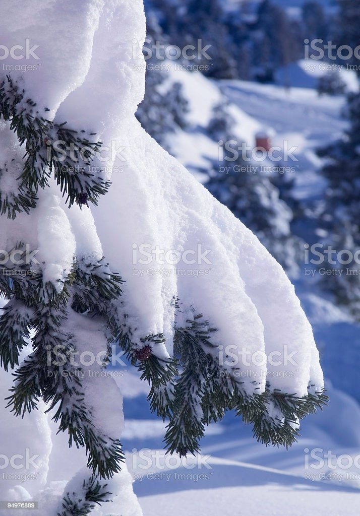Snow-covered Branch & Long Shadows royalty-free stock photo