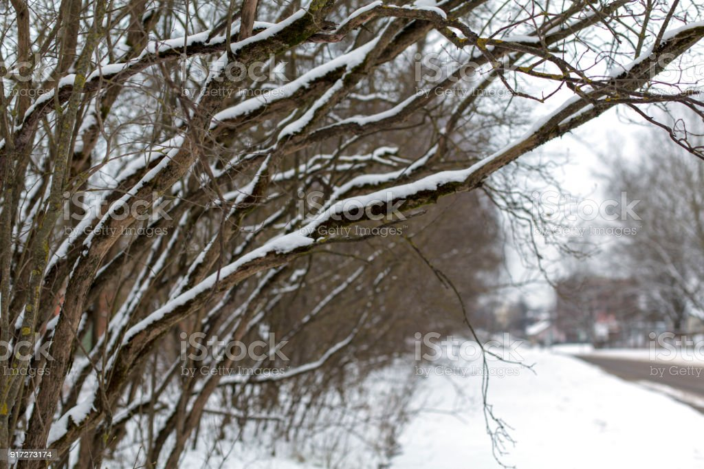 Snow-covered branches on a street in winter cloudy day royalty-free stock photo