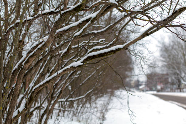 Snow-covered branches on a street in winter cloudy day stock photo