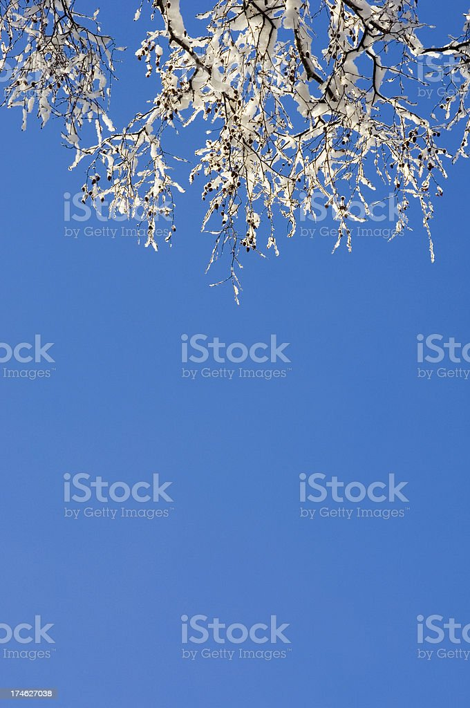 Snow-covered branches royalty-free stock photo