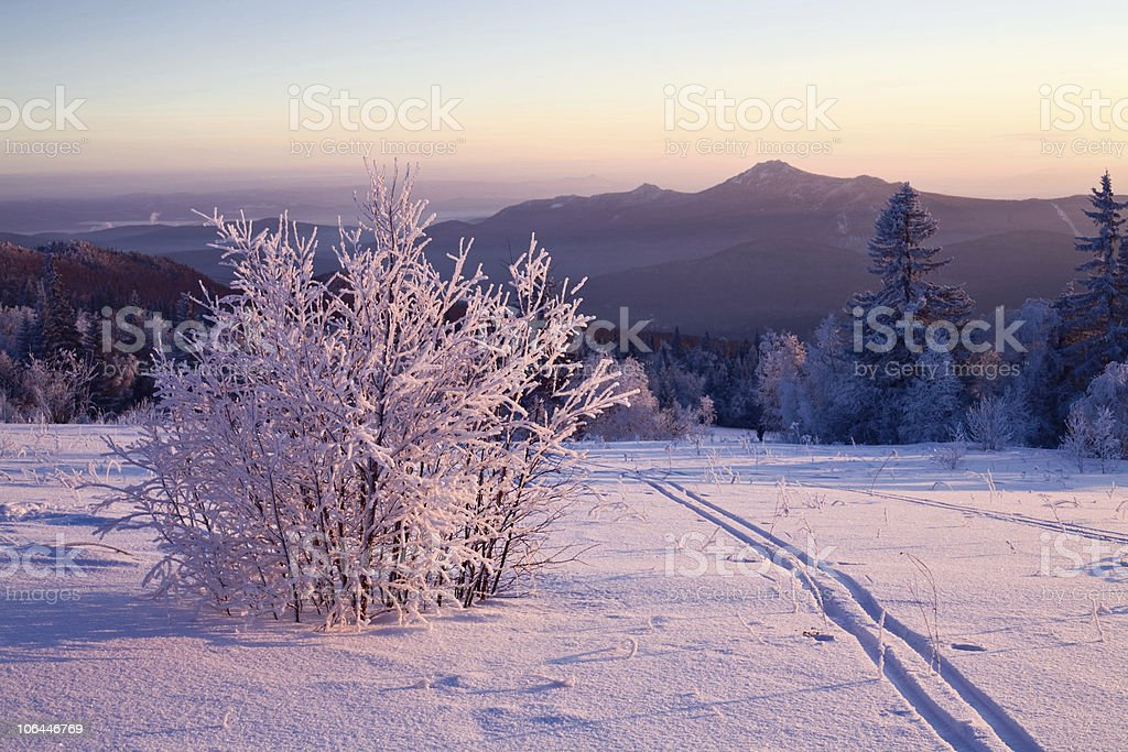 Snow-covered bush and ski-track stock photo